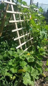358 best vegetable gardening images on pinterest vegetables