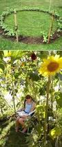 Affordable Backyard Landscaping Ideas by Best 10 Sunflower Garden Ideas On Pinterest Growing Sunflowers