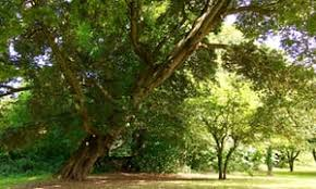 european tree of the year 2017 vote for your favourite tree
