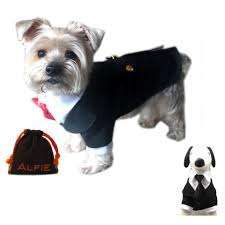 cute halloween costumes for small dogs i love my chi