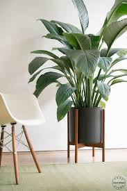 plant stand indoor plant wall shelf branch stand decorating