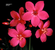 flowering plant families uh botany