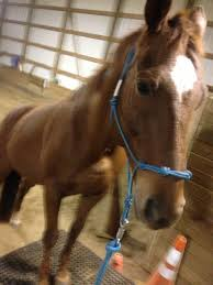 images about the arabian horse on pinterest horses and egyptian