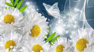 beautiful sunflower butterfly hd wallpapers rocks