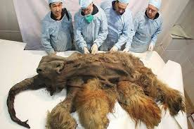 ice age cave lion cubs permafrost mummies
