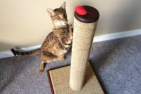sofa that cats won t scratch how to choose the best cat scratching post purrfectpost com