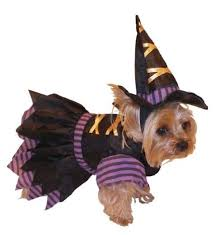 super cute pet costumes as low as 3 69