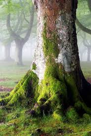 172 best rpg arbres et forets trees and forest images on