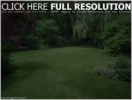 Landscaping Ideas For Privacy Backyards Splendid Backyard Trees For Privacy Modern Backyard