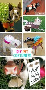 Halloween Costumes Dogs Cutest Puppy Costumes 2011 Adorable Diy Pet Costumes Landeelu
