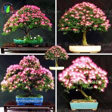 discount ornamental potted trees 2017 ornamental potted trees on