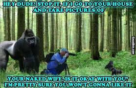 Funny Gorilla Meme - mad gorilla meme funny lol meme humor pictures
