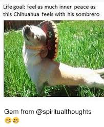 Inner Peace Meme - life goal feel as much inner peace as this chihuahua feels with his