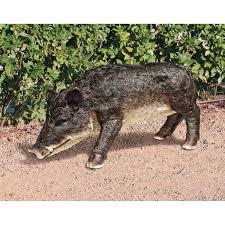Arkansas Razorback Home Decor by Amazon Com Design Toscano Razorback Wild Boar Statue Outdoor