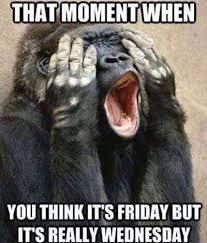 Funny Monkey Meme - funny monkey friday moment funny pinterest funny monkeys