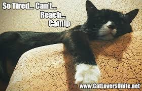 Tired Cat Meme - funny cat meme catloversunite net