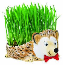 amazon com creativity for kids grow a hedgehog toys u0026 games