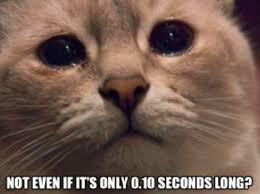 Sad Cat Meme - sad cat film censorship board approval meme cilisos current