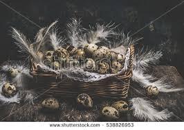 quail eggs stock images royalty free images u0026 vectors shutterstock