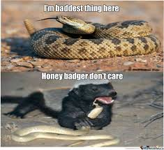 Honey Badger Memes - honey badger by andrew592 meme center