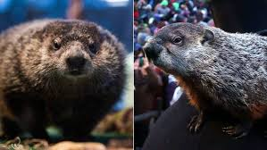 staten island chuck early spring punxsutawney phil sees