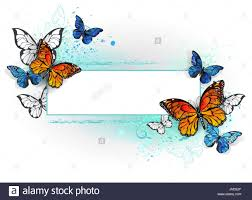 rectangular with blue butterfly morpho and orange monarch