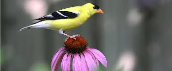 native plant species bird friendly native plants audubon north carolina