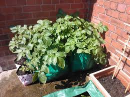 Vegetable Pot Garden by How To Grow Vegetables In A Container Containable