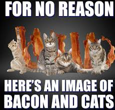 Bacon Memes - for no reason bacon and cats bacon know your meme