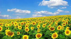 Image Of Spring Flowers by Spring Flowers Desktop Wallpaper Splendid Wallpaper Hd Spring