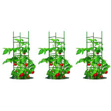 amazon com gardener u0027s blue ribbon 3 pack ultomato tomato plant
