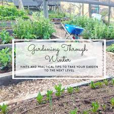 garden design garden design with winter gardening best practice