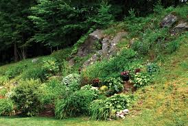 Rock Gardens On Slopes Lessons From The Gardening On Rocky And Steep Slopes