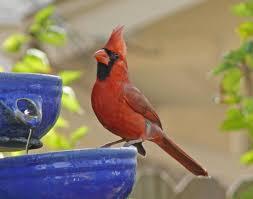 Backyard Song Take Our Common Backyard Birds Song Quiz