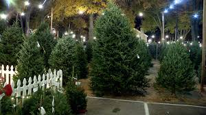 tree shortage may drive up christmas tree prices wcnc com