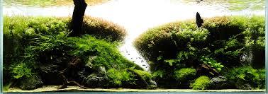japanese aquascape aquascaping analysis project ryuboku scapefu