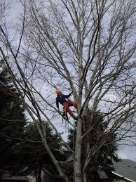 treekeeper tree services in portland oregon professional tree