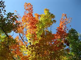 why do the leaves change color u2013 rebecca heisman