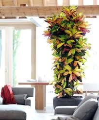best indoor house plants indoor house trees best tall indoor plants ideas on best indoor