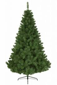 buy imperial pine tree green from our trees
