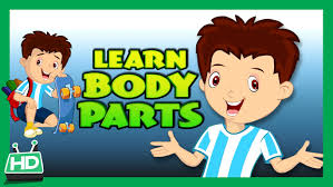 body parts for kids learning human body parts for kids kids