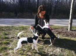why adopt sita u0027s dog sanctuary u0026 rescue