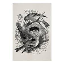 vintage bird nest art posters u0026 framed artwork zazzle com au