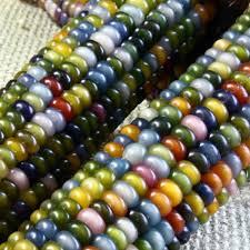 rainbow corn seeds seeds