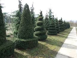 Artificial Tree For Home Decor by Home Decoration Spiral Topiary Garden And Tall Topiary Trees