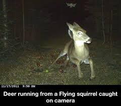 Squirrel Meme - flying squirrel meme by hailjesus memedroid