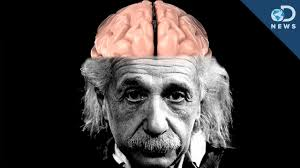 knowledge is power einstein quote how einstein u0027s brain is different than yours youtube