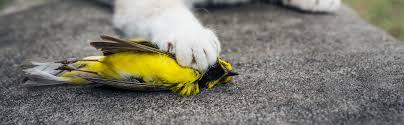 cats and birds american bird conservancy