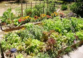 Backyard Kitchen Garden Raised Bed Gardening Wikipedia