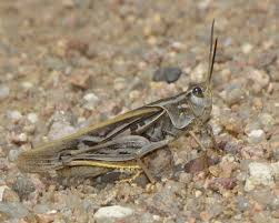 bug eric july 2012